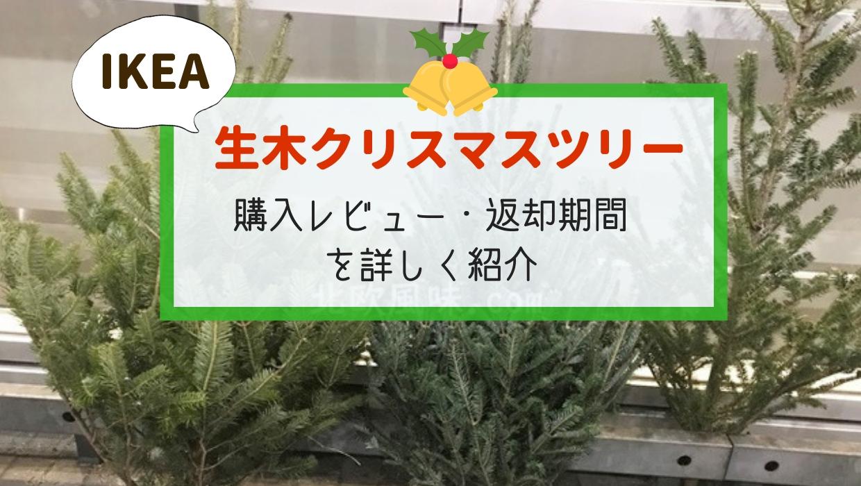 イケア生木クリスマスツリー